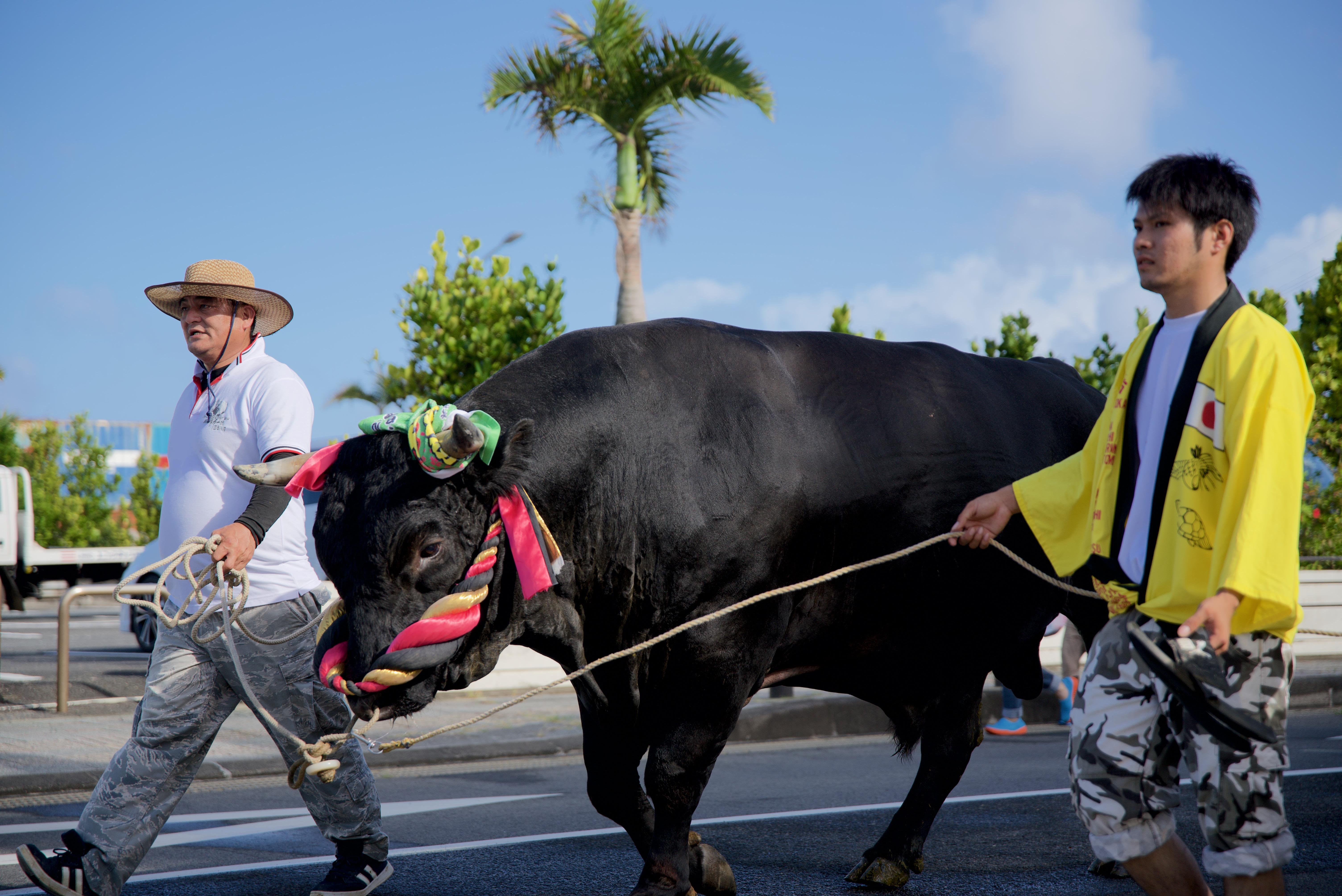 徳之島どんどん祭り