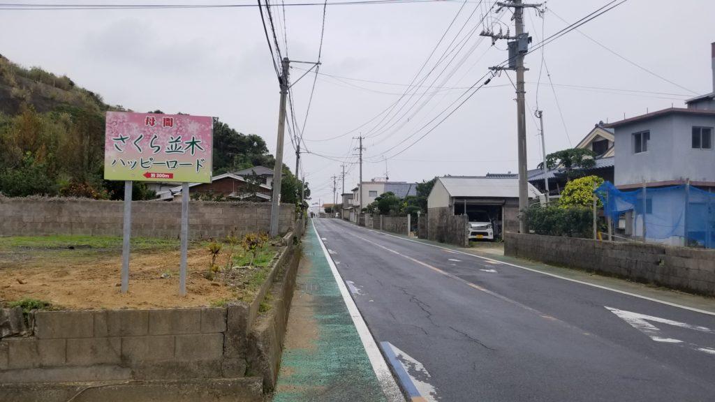 徳之島 桜